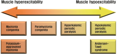 Diagram of muscle channelopathies showing hypokalemic periodic paralysis on a spectrum of channelopathy diseases.
