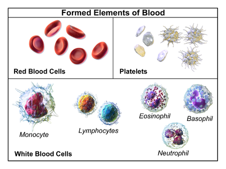 Image shows red blood cells, different types of white blood cells - monocytes, T-cell and B-cell lymphocytes, plus platelets.